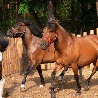 Hotel dla koni Płock